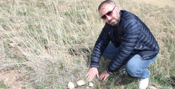 Coreker Yaylası'nda doğal mantarlar çıkmaya başladı