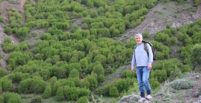 Fitoterapi için şifalı bitkiler topluyor