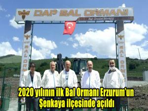 2020 yılının ilk Bal Ormanı Erzurum'un Şenkaya ilçesinde açıldı.