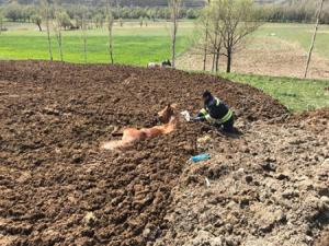 Hayvan gübresine batan At itfaiye ekiplerince kurtarıldı