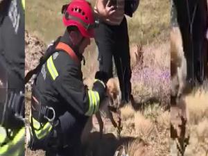 Kuyuya düşen tilkiyi itfaiye ekipleri kurtardı
