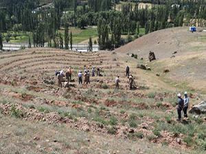 Narman'da 251 şehit anısına 251 çam fidanı dikildi
