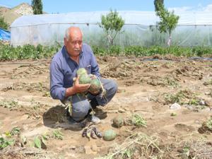 Sel suları sera ve ekili alanlara zarar verdi