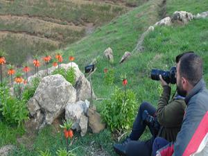 Ters laleleri fotoğraflamak için 2 bin rakımlı dağa tırmanıyorlar