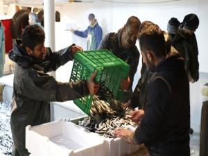 Yaklaşık 500 ton avlanan hamsi Türkiye'nin dört bir yanına gönderildi