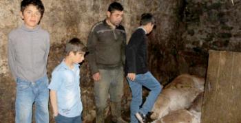 Erzurum'da yangın: 9 kişi yaralandı, 7 hayvan telef oldu