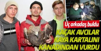 Kaçak avcılar kaya kartalını kanadından vurdu