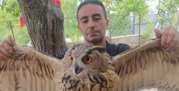 Yaralı halde bulduğu baykuşu tedavi edip doğaya saldı